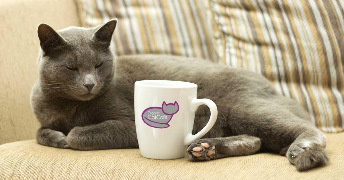 Organic Cat Cafe & Music Lounge