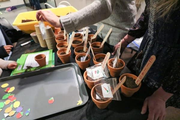 seedlings-12