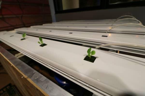 seedlings-7