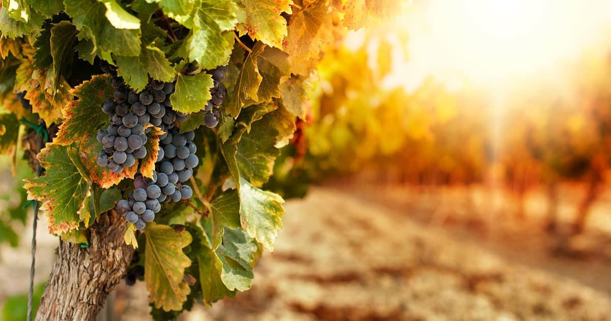 Eagle Mountain Winery